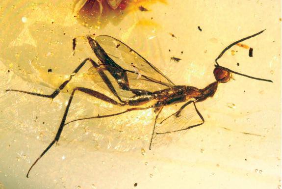 Hmyz zakonzervovaný v jantári