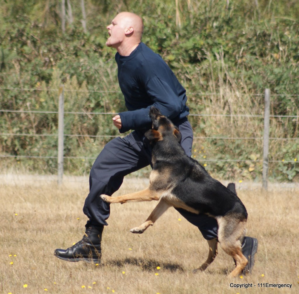 Description nz police dog