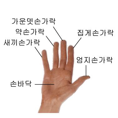 File:Name of human fingers ko.jpg - Wikimedia Commons