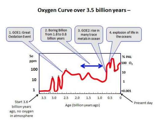 an introduction to the history of oxygen An introduction to transient spectroscopy  the construction of molecular devices capable of performing the photo-induced splitting of water into hydrogen and oxygen.