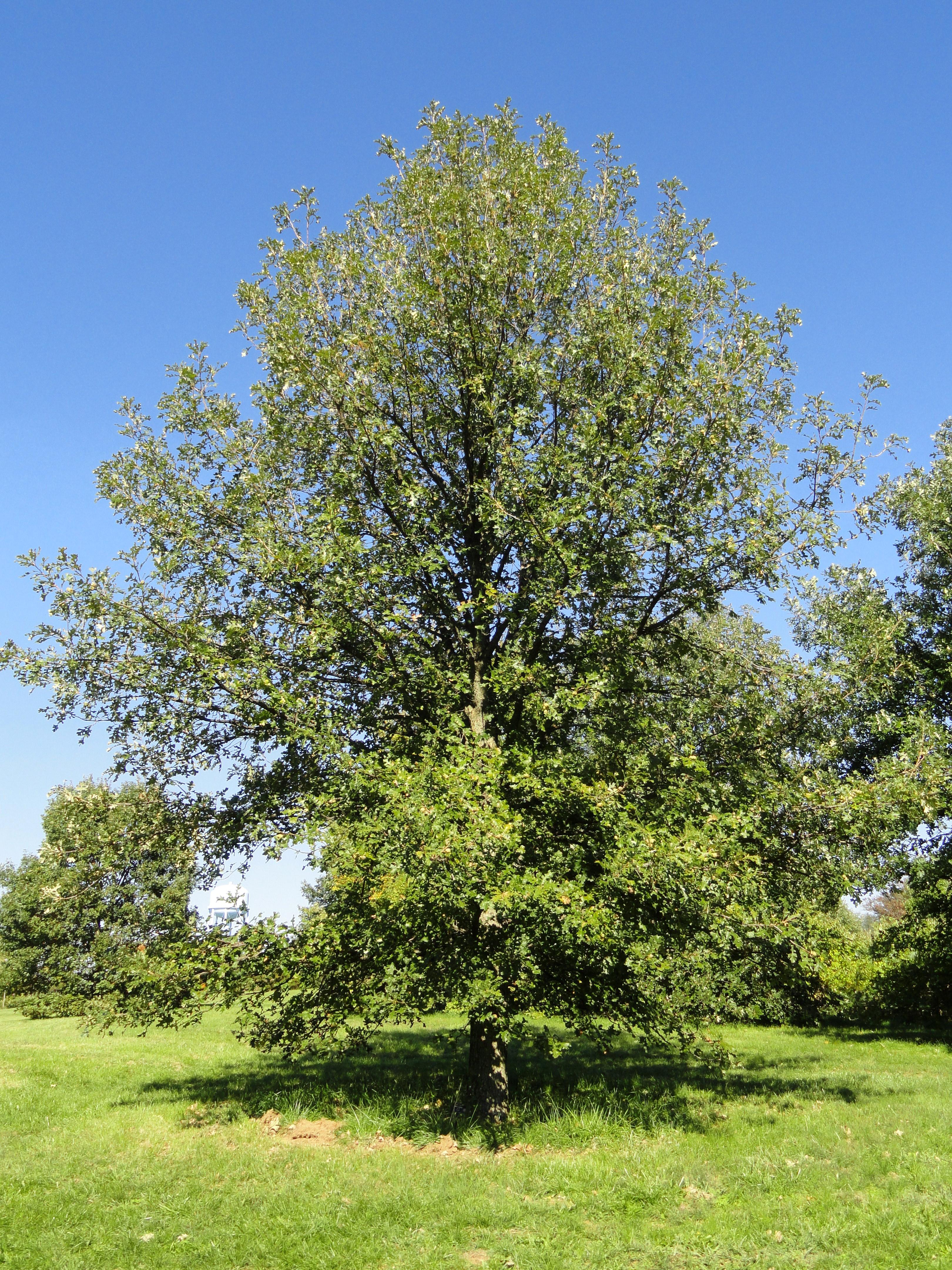 tree summary