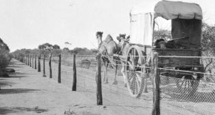 Boundary rider's team at the 100 mile No. 1 fence in Western Australia in 1926