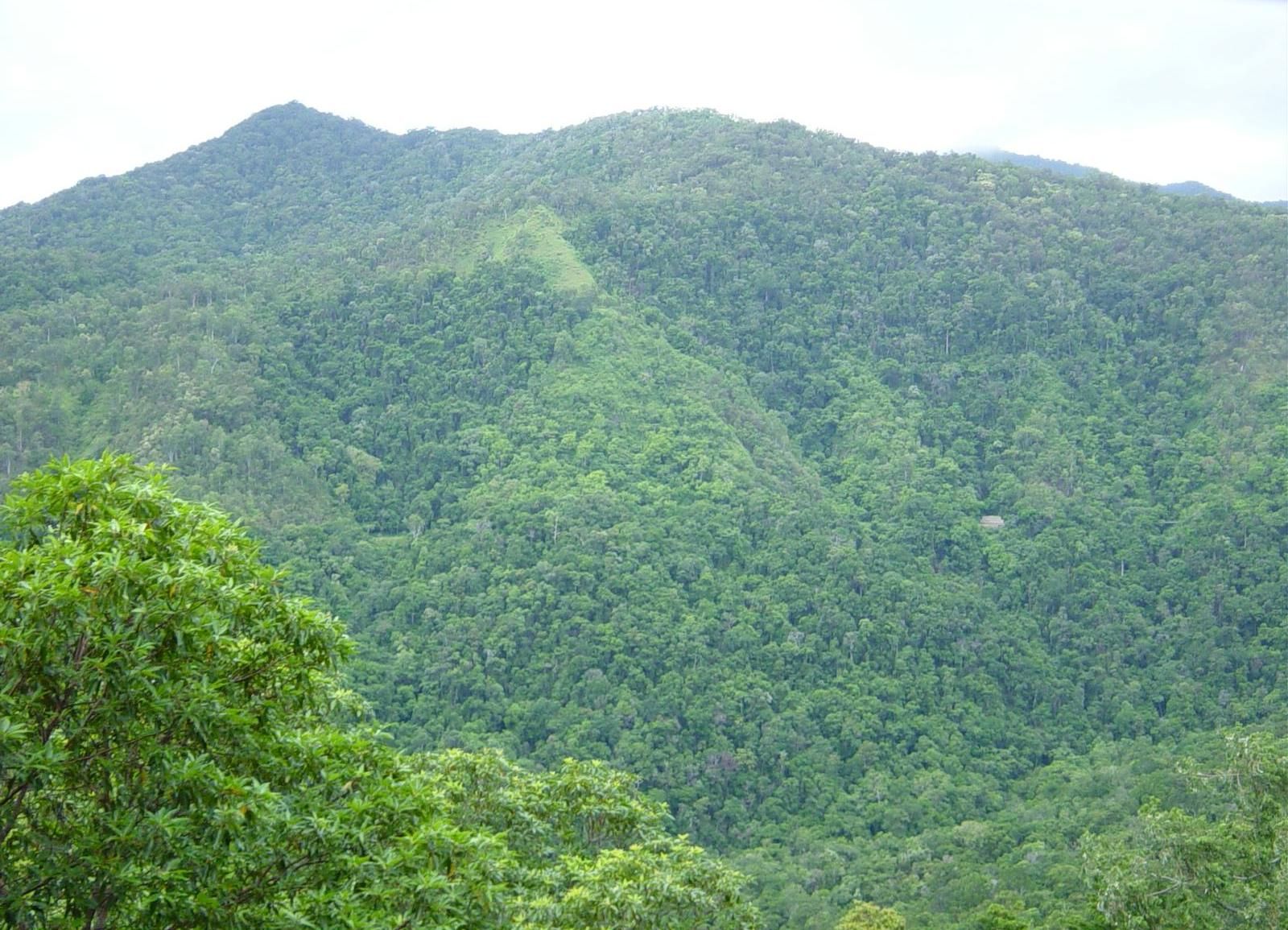 File rainforrest between kuranda and cairns north east for Australian rainforest