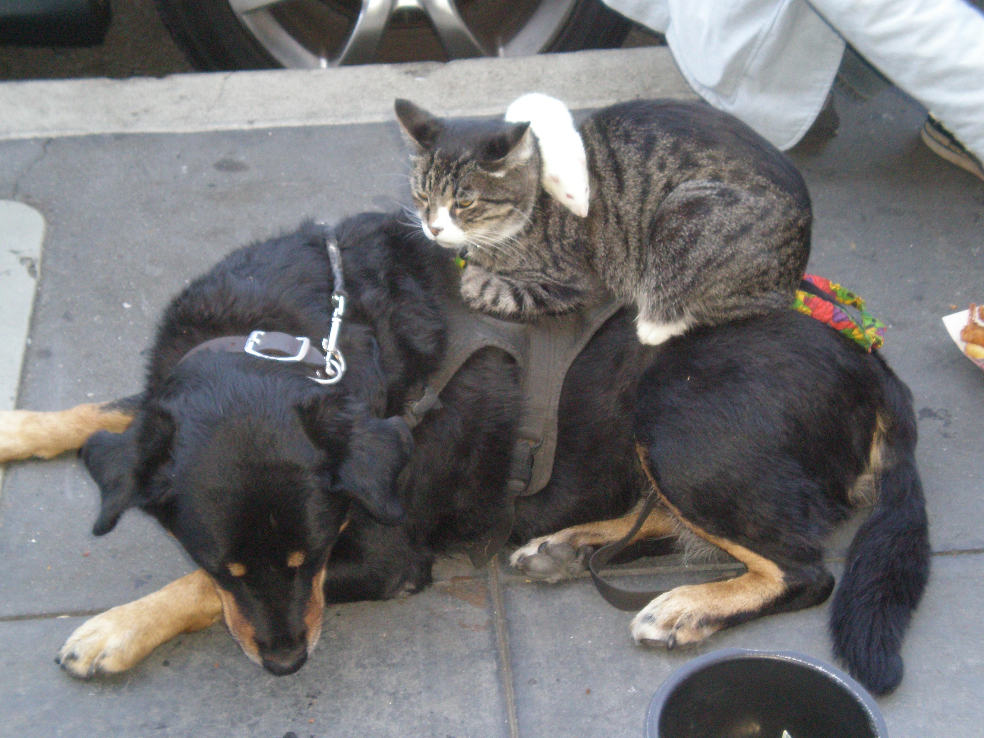Dog Eating Cat Litter