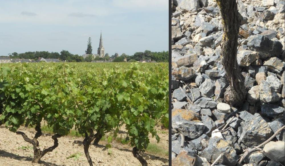 Savennières, vignes et terroir