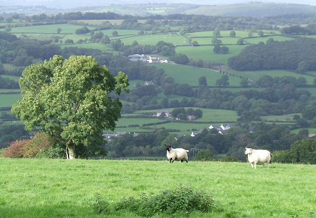 Sheep grazing above the Teifi Valley, Ceredigion - geograph.org.uk - 566473