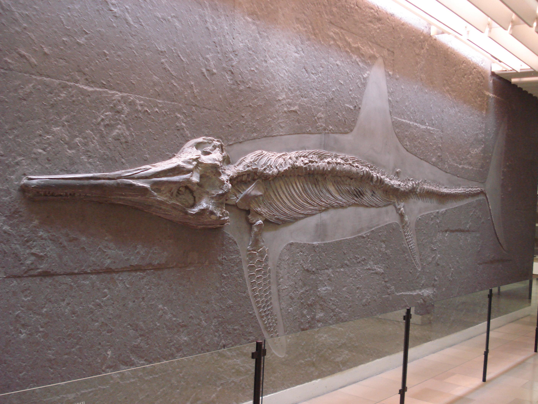 Temnodontosaurus  Temnodontosauru...