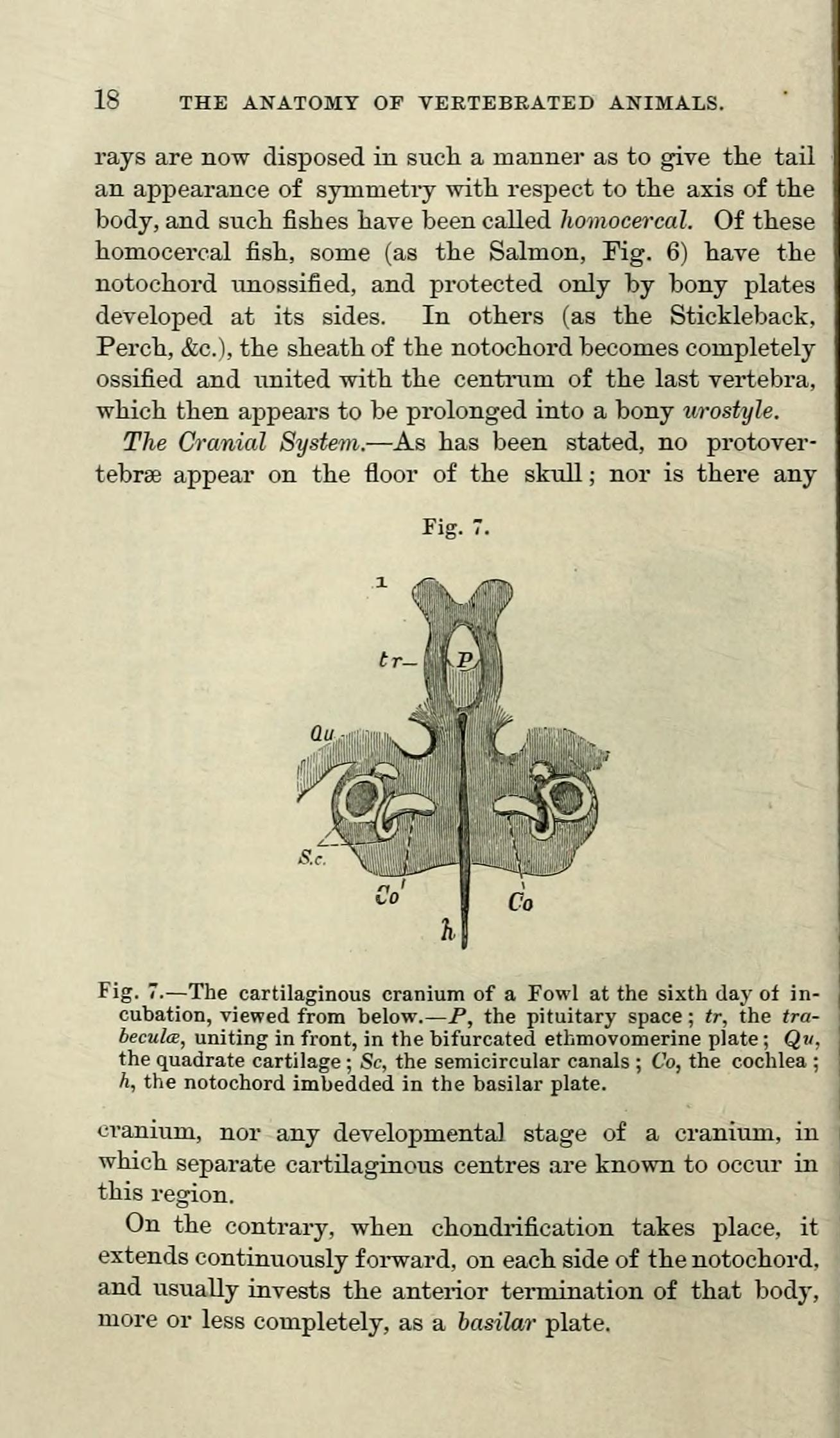 Filea Manual Of The Anatomy Of The Vertebrated Animals Page 18