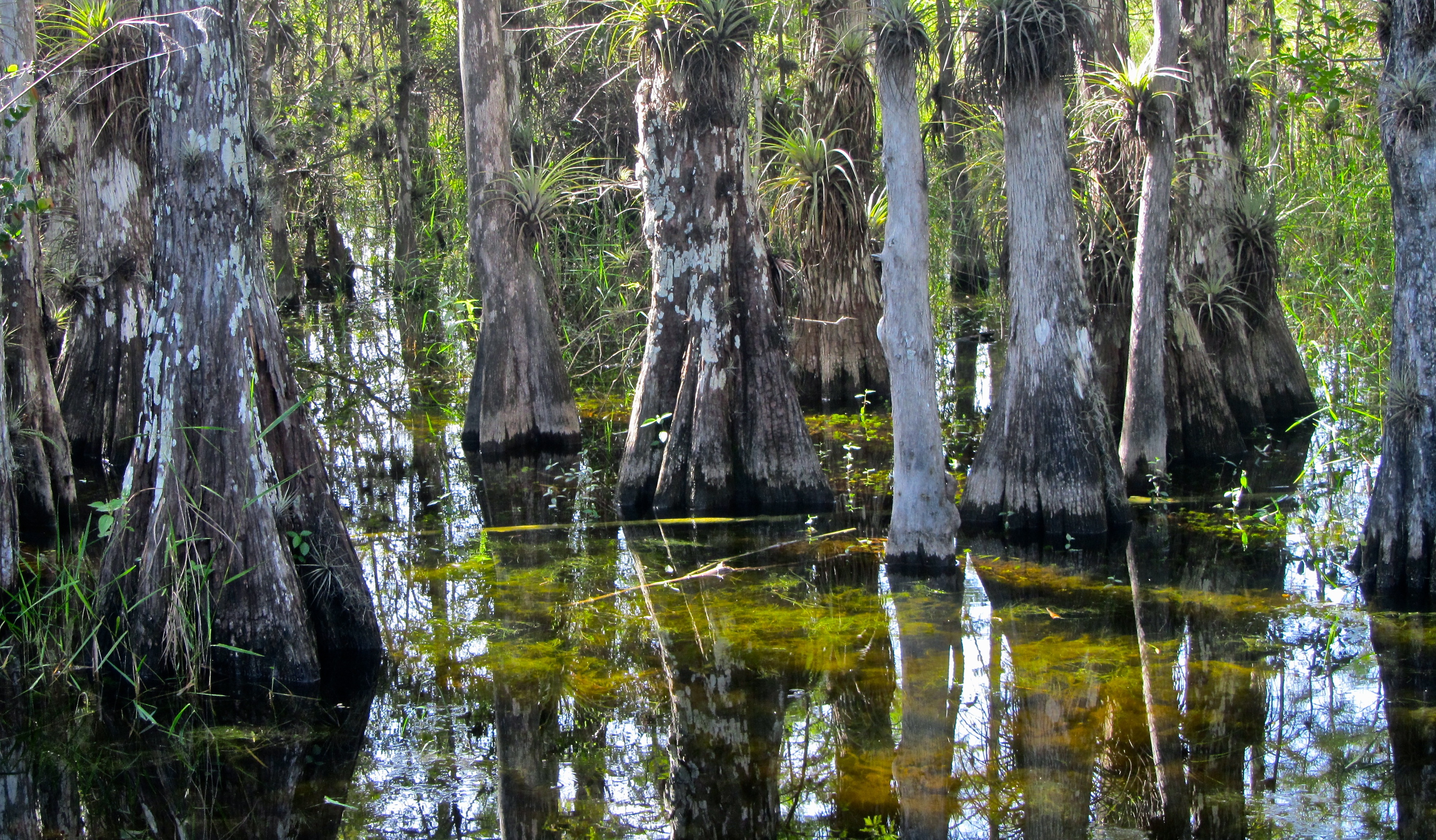 Big Cypress National Preserve.jpg