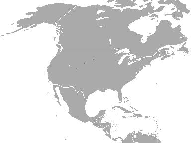 Blackfooted ferret Wikipedia