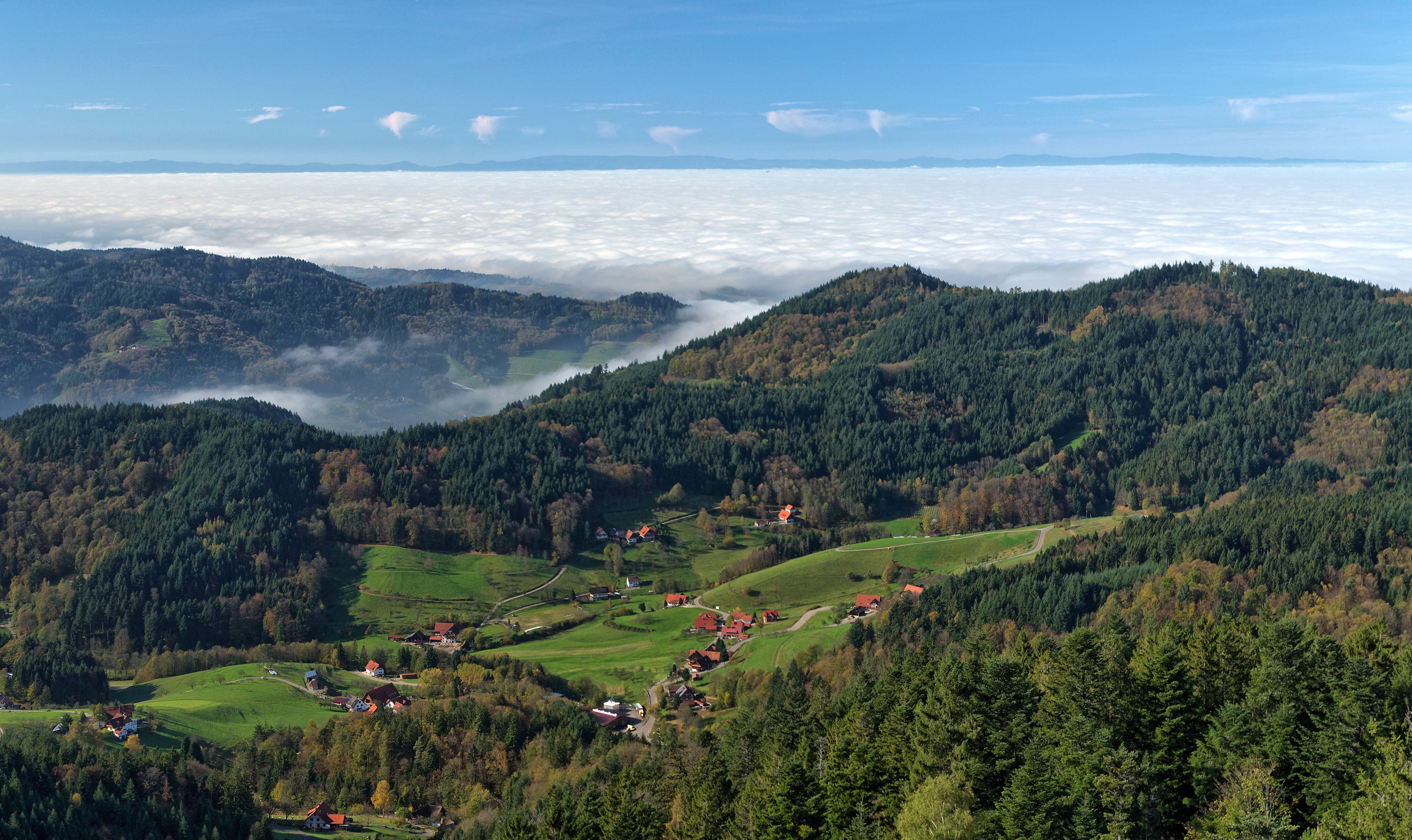 Black Forest - Wikipedia