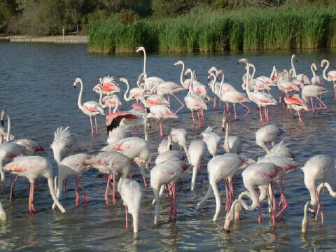 Camargue National Park