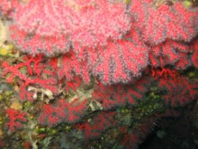 crescita rosso brillante sulla pelle