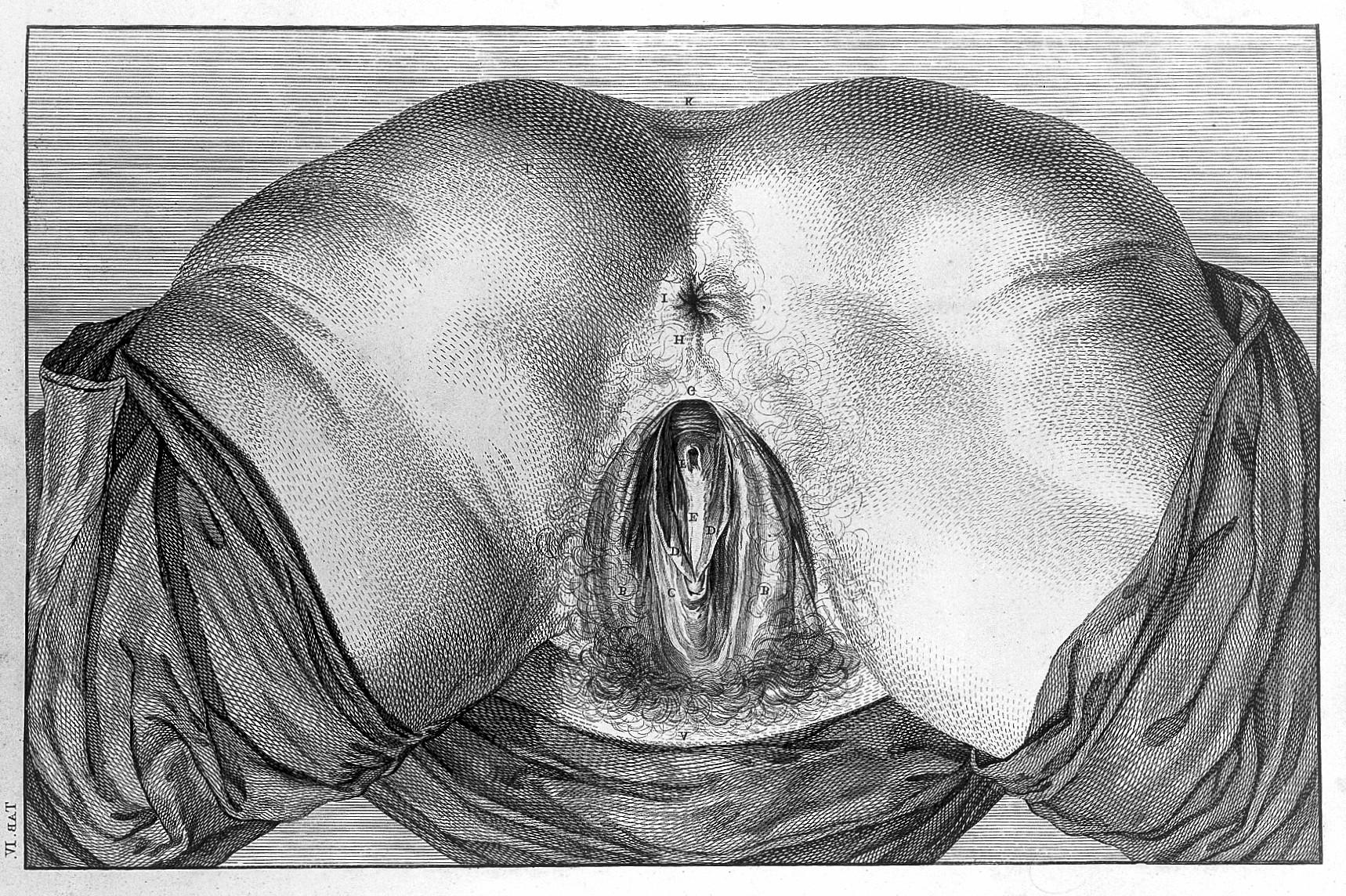 Рисунок вагины