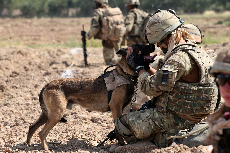 1st Military Working Dog Regiment - Wikipedia