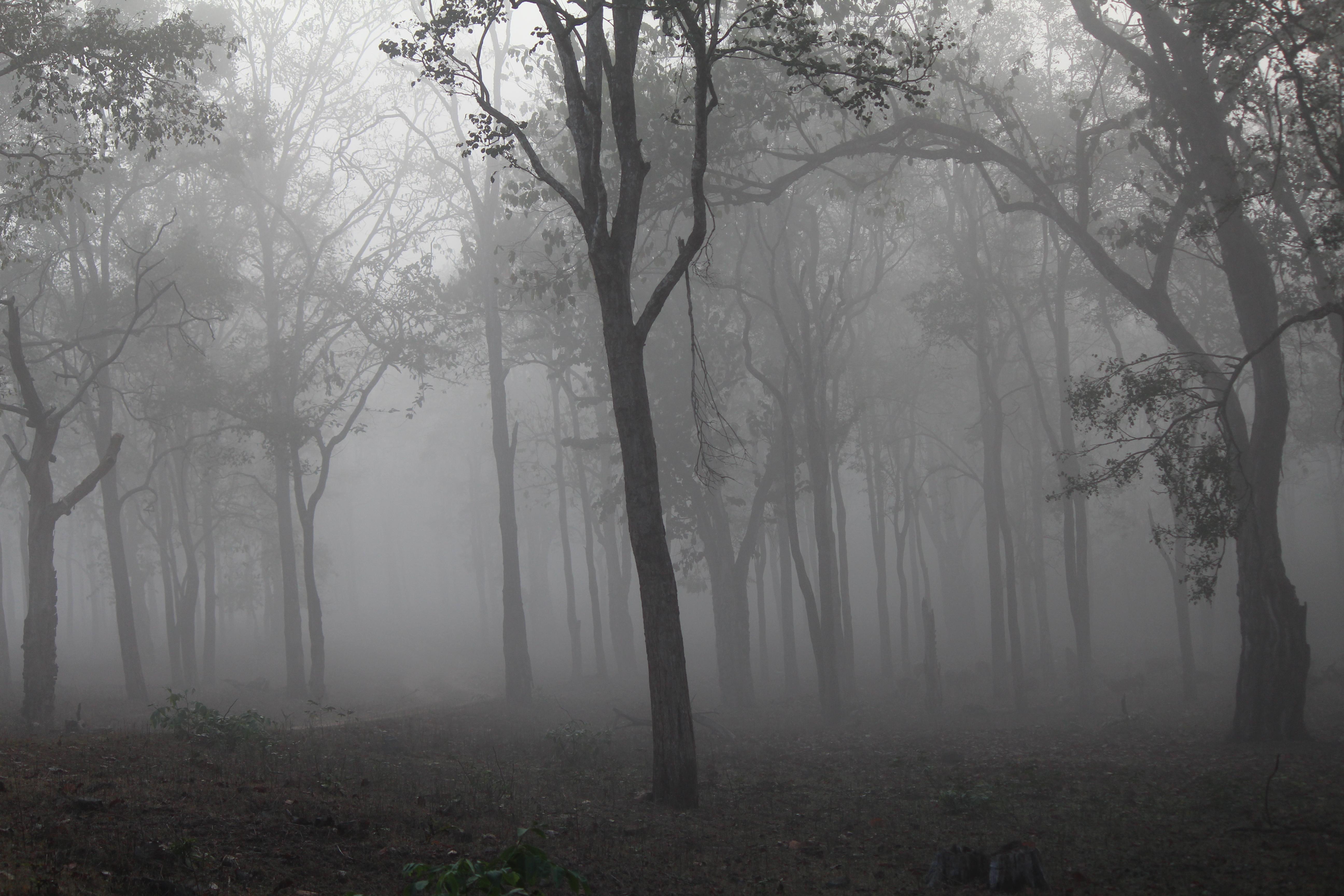 фон туманный лес сначала непонравилось когда