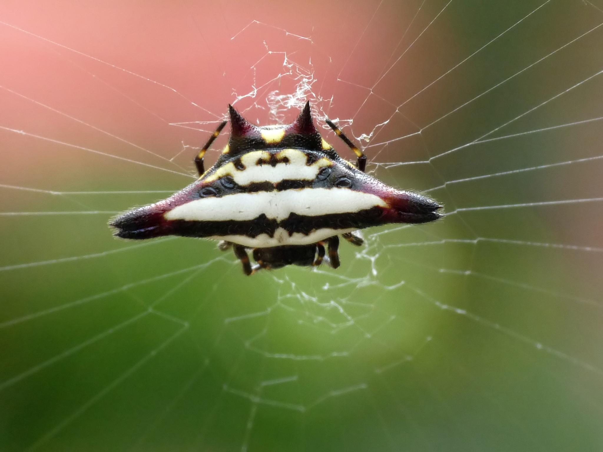 Spider Identification  Spider bites
