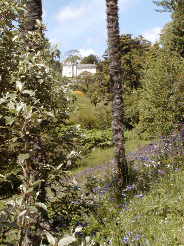 Glendurgan Garden - Wikipedia