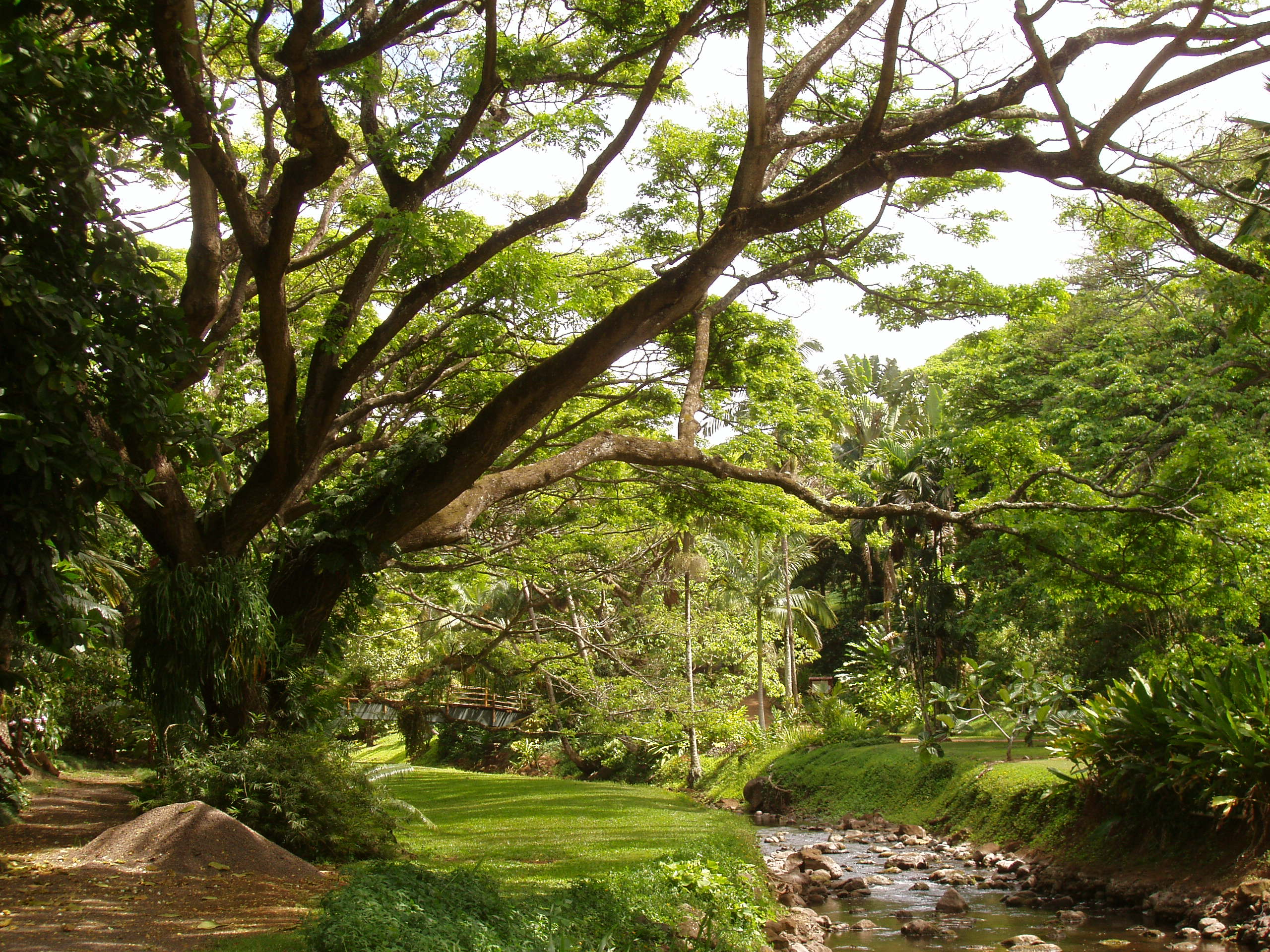 Lovely Image Credits: McBryde Garden, ...