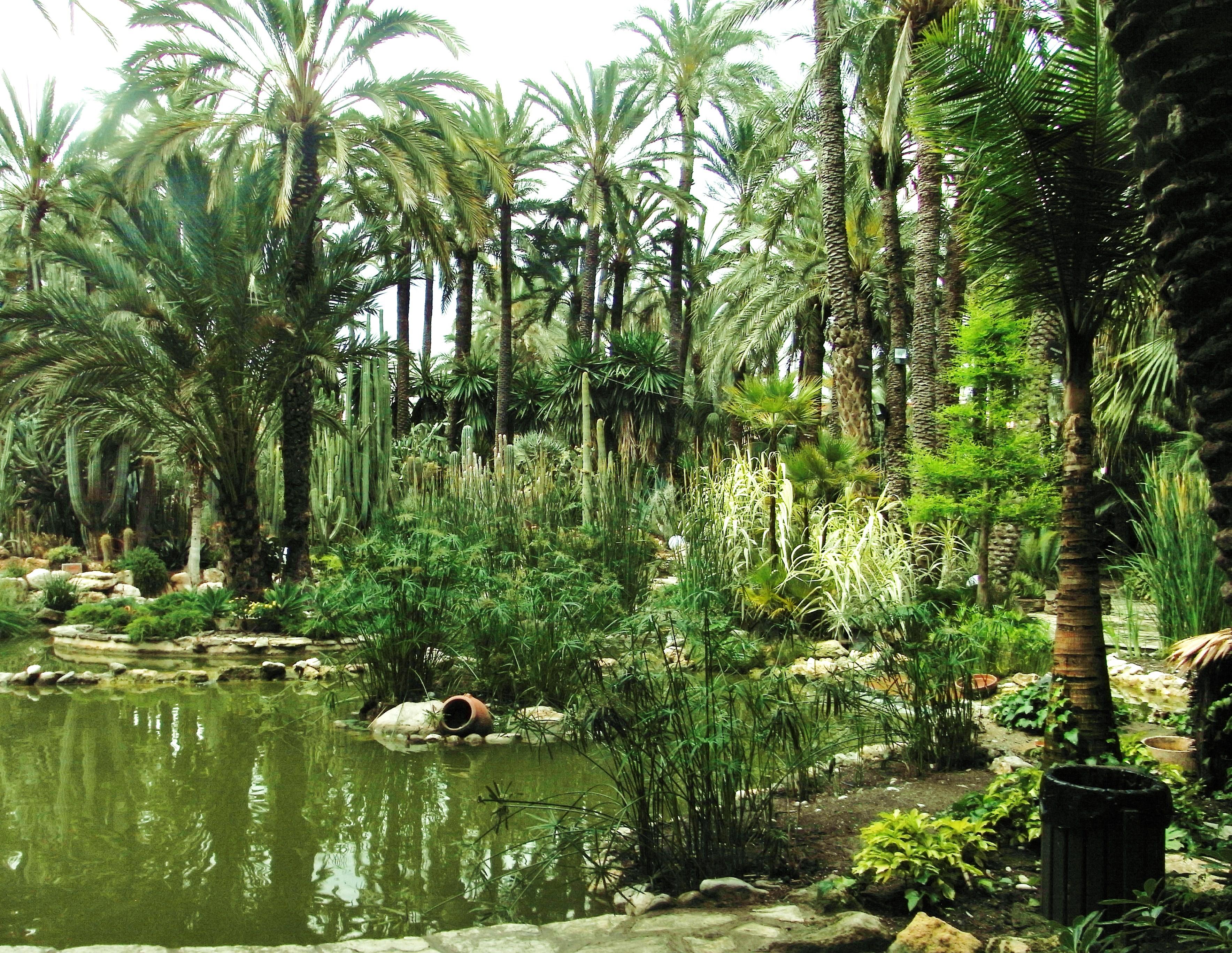 File palmerar d 39 elx wikimedia commons for Camping el jardin alicante