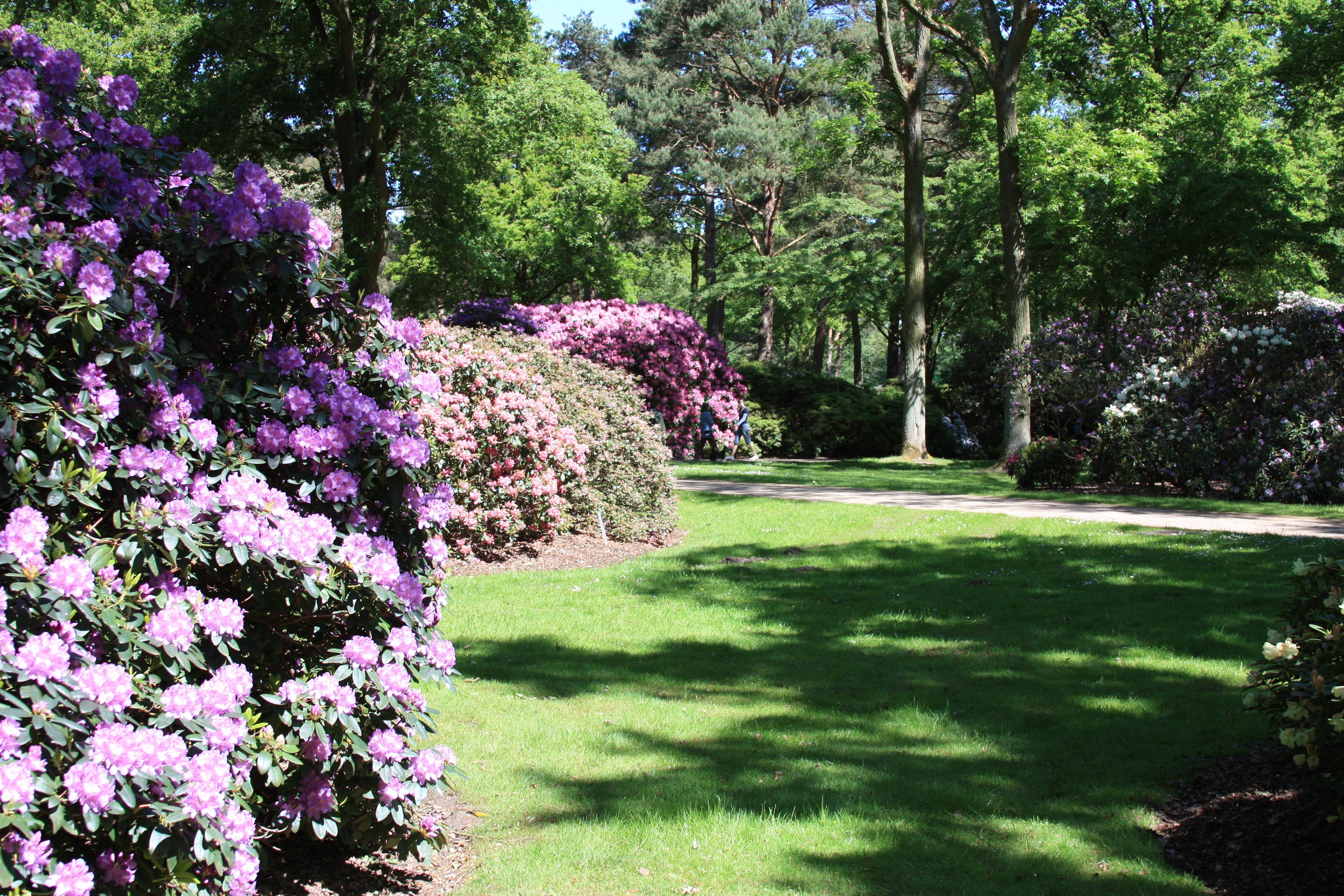 rhododendron park bremen wikiwand