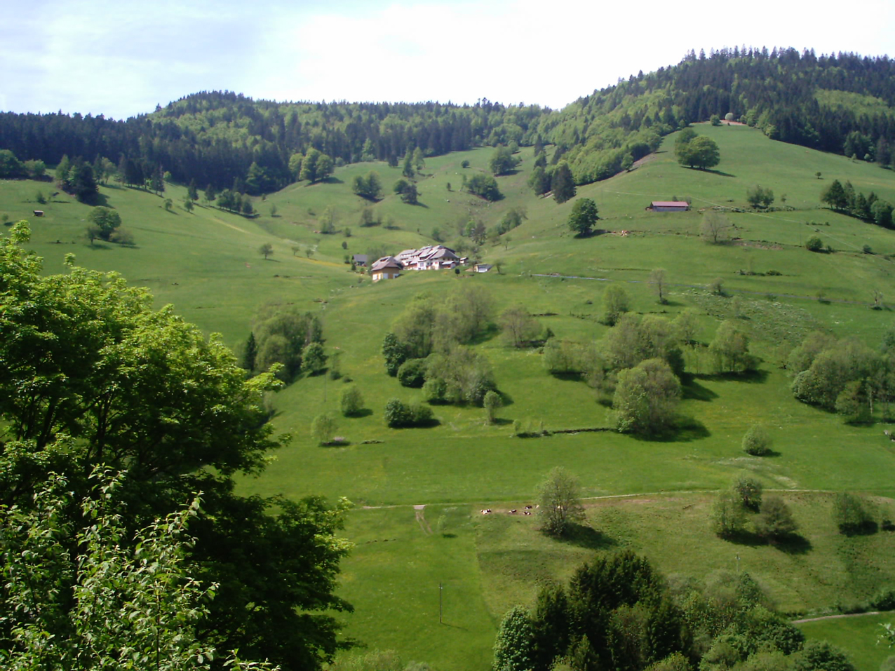 Paysage typique de Forêt-Noire