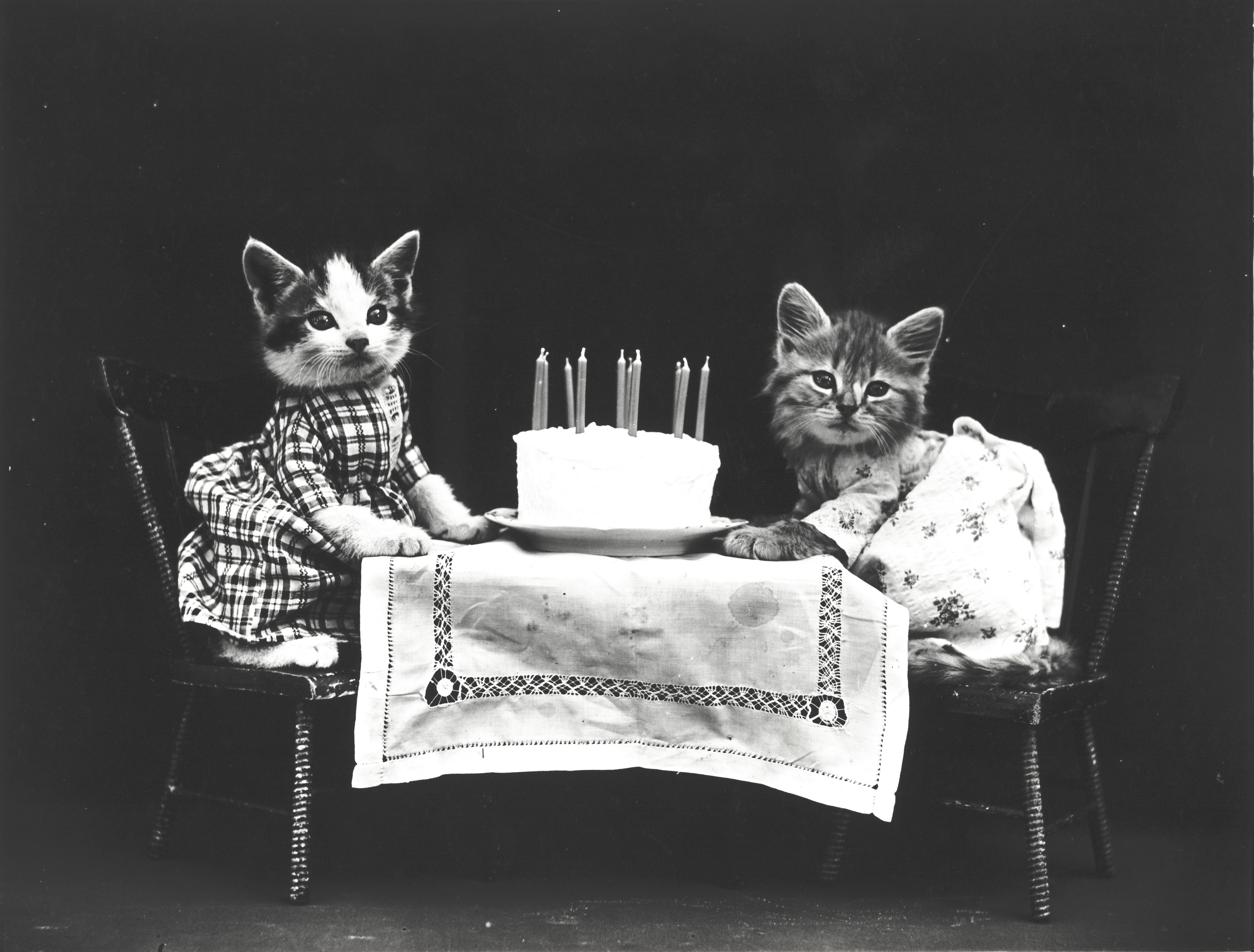 Superb File The Birthday Cake Wikimedia Commons Birthday Cards Printable Trancafe Filternl