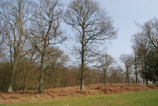 The edge of St Dunstan's Wood - geograph.org.uk - 1251674