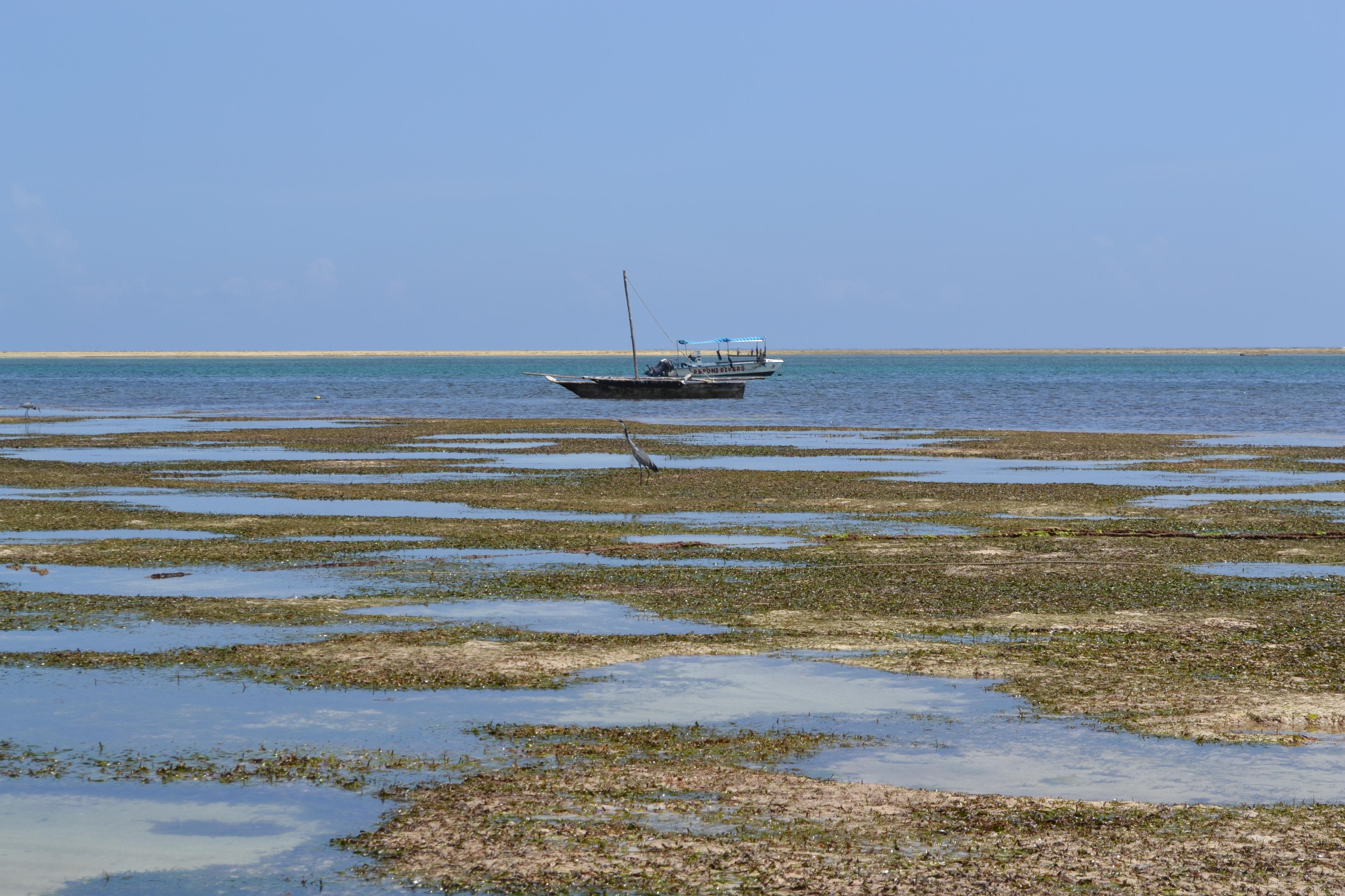 Low Tide For Bay Of Islands Nfld For Nov Th