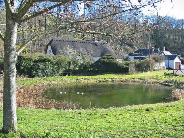 Village pond Tollard Royal - geograph.org.uk - 130033