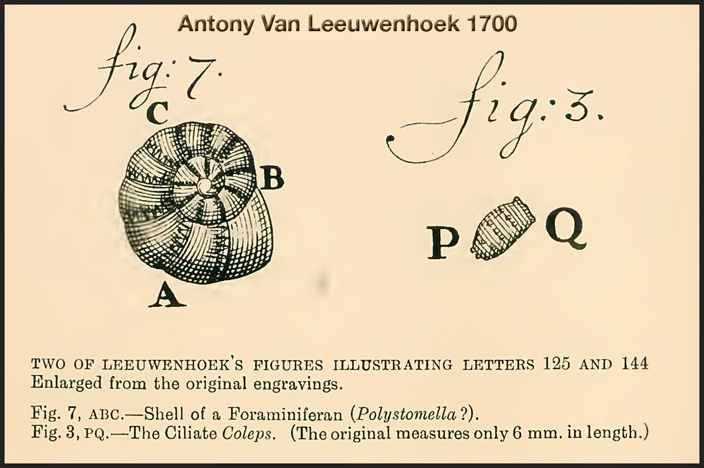 where did anton van leeuwenhoek work