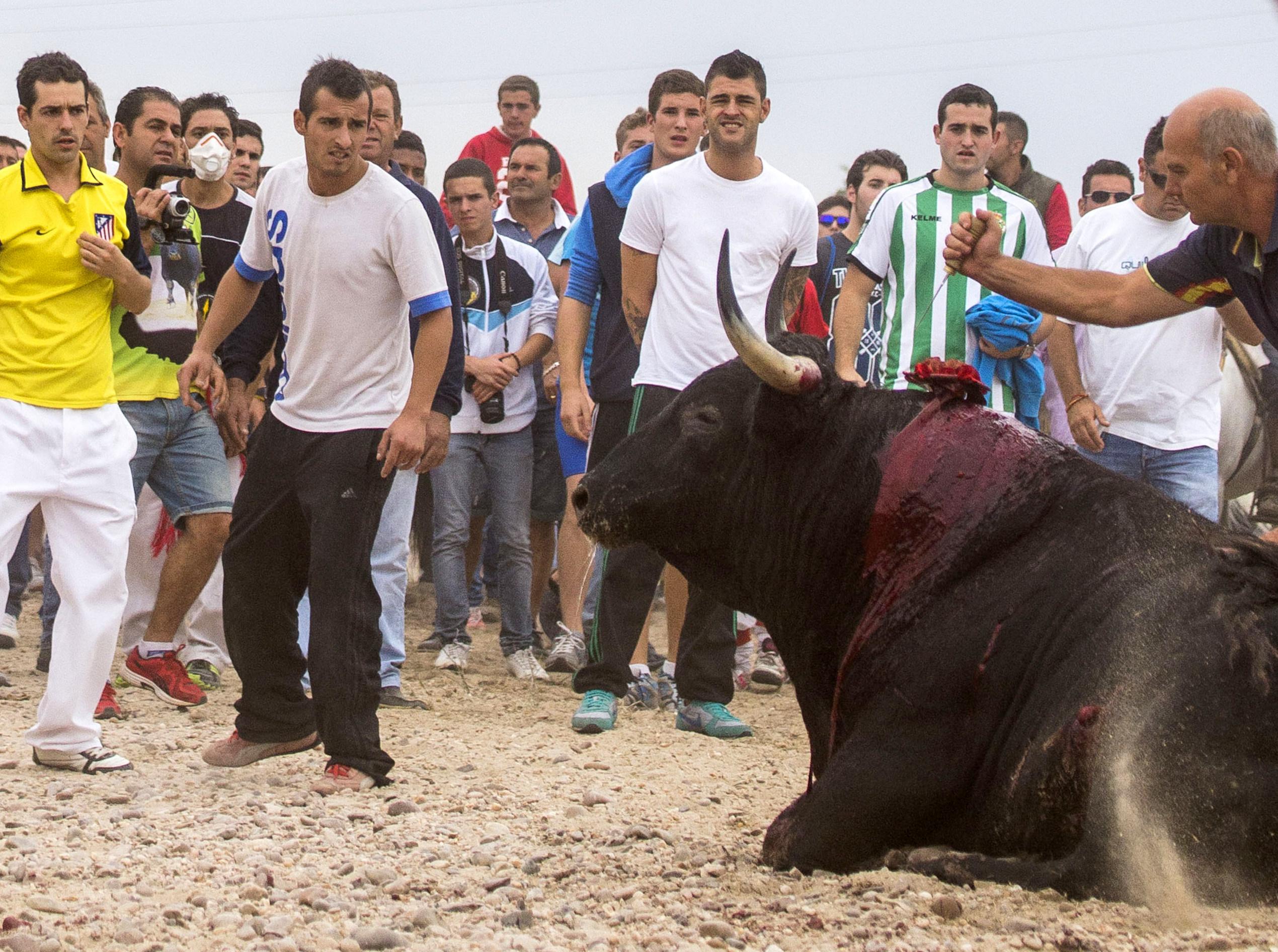 Toro De La Vega Wikipedia