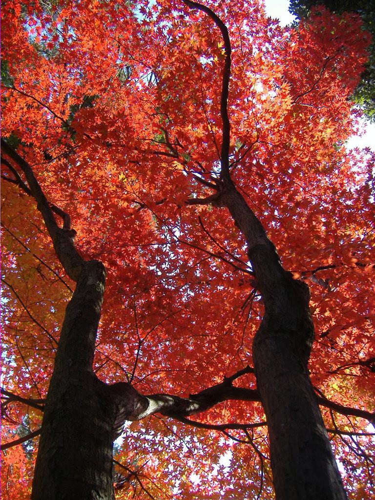 Autumn leaf color.jpg