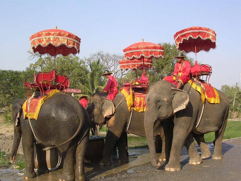فیل سواری در تایلند