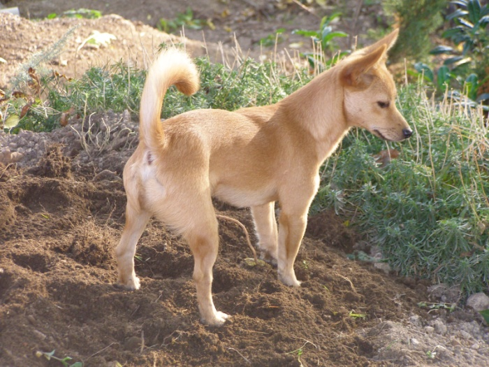 Small Nonshedding Dogs For Adoption In Tennessee