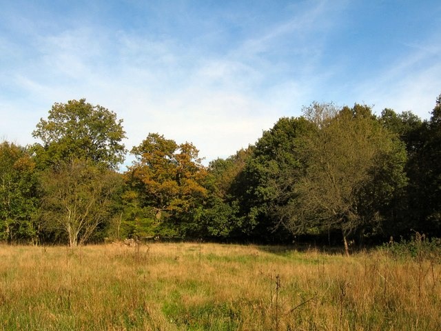 Clearing in Danemead Nature Reserve - geograph.org.uk - 273581