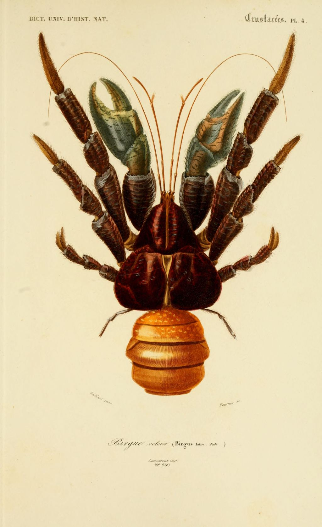 Coconut Crab Wiki