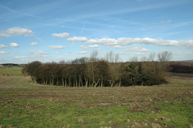 Copse near Wombwell Wood - geograph.org.uk - 140930