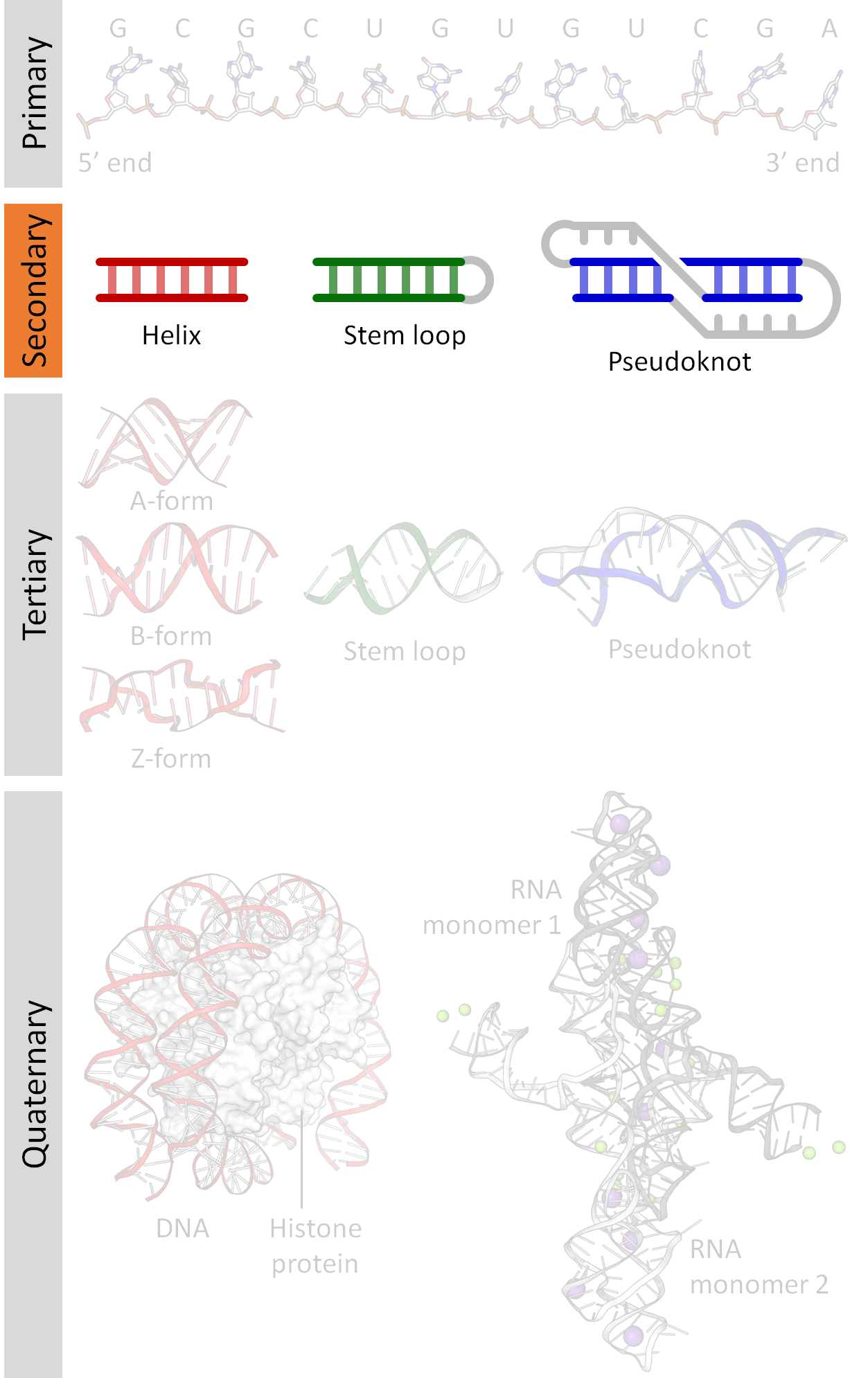 Biophysical Chemistry of Nucleic Acids and Proteins