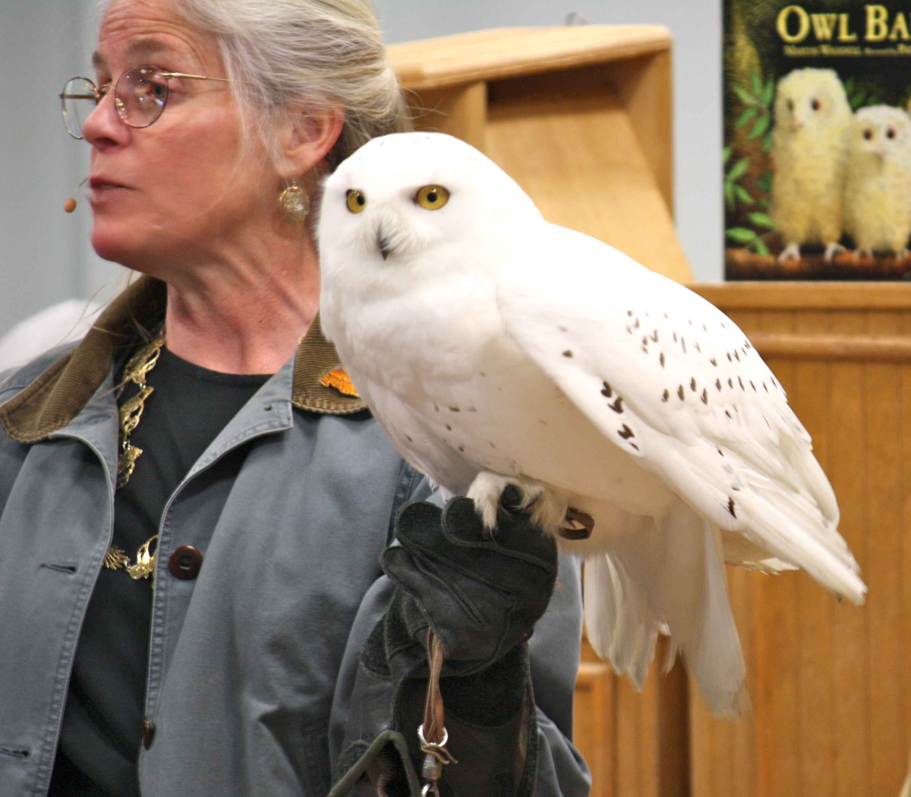 File:Female person holds snowy owl bird bubo scandiaca.jpg ...