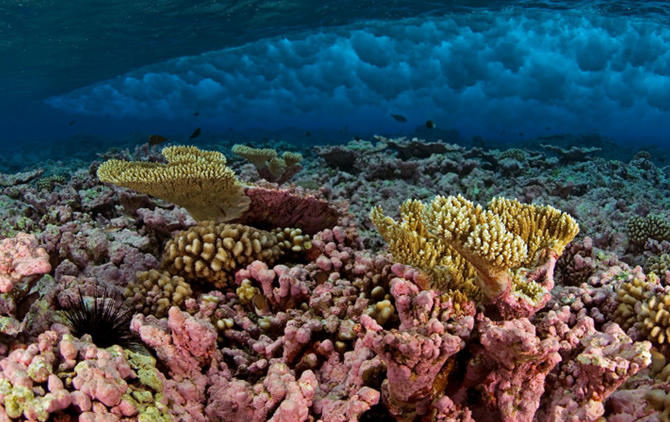 File:Habitats at Kingman Reef - Peerj-81-fig-2E.png - Wikimedia ...
