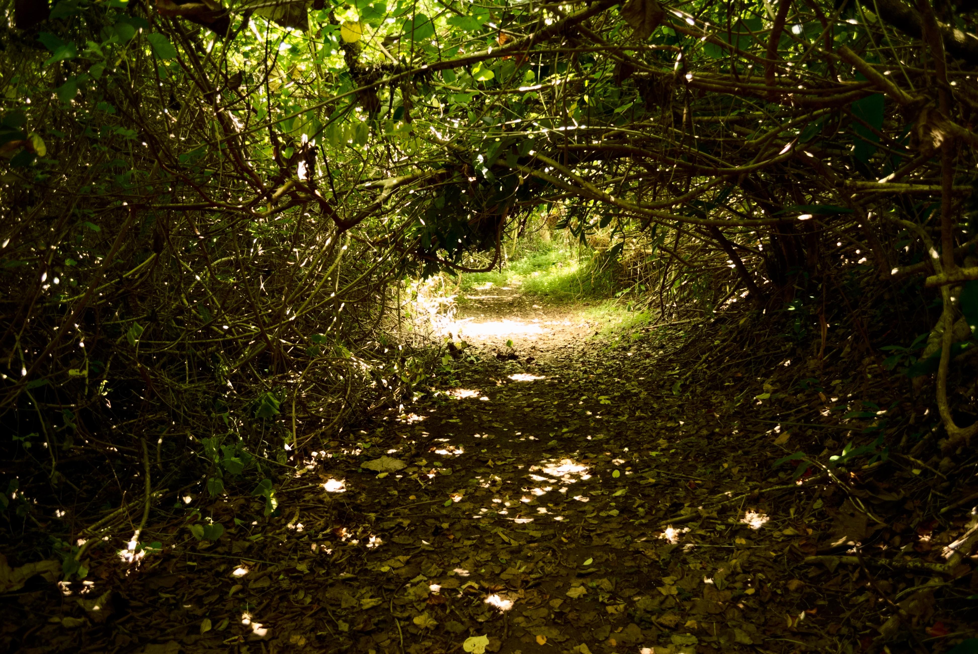 File:Hoomaluhia Botanical Garden - Stream Trail (3).jpg - Wikimedia ...