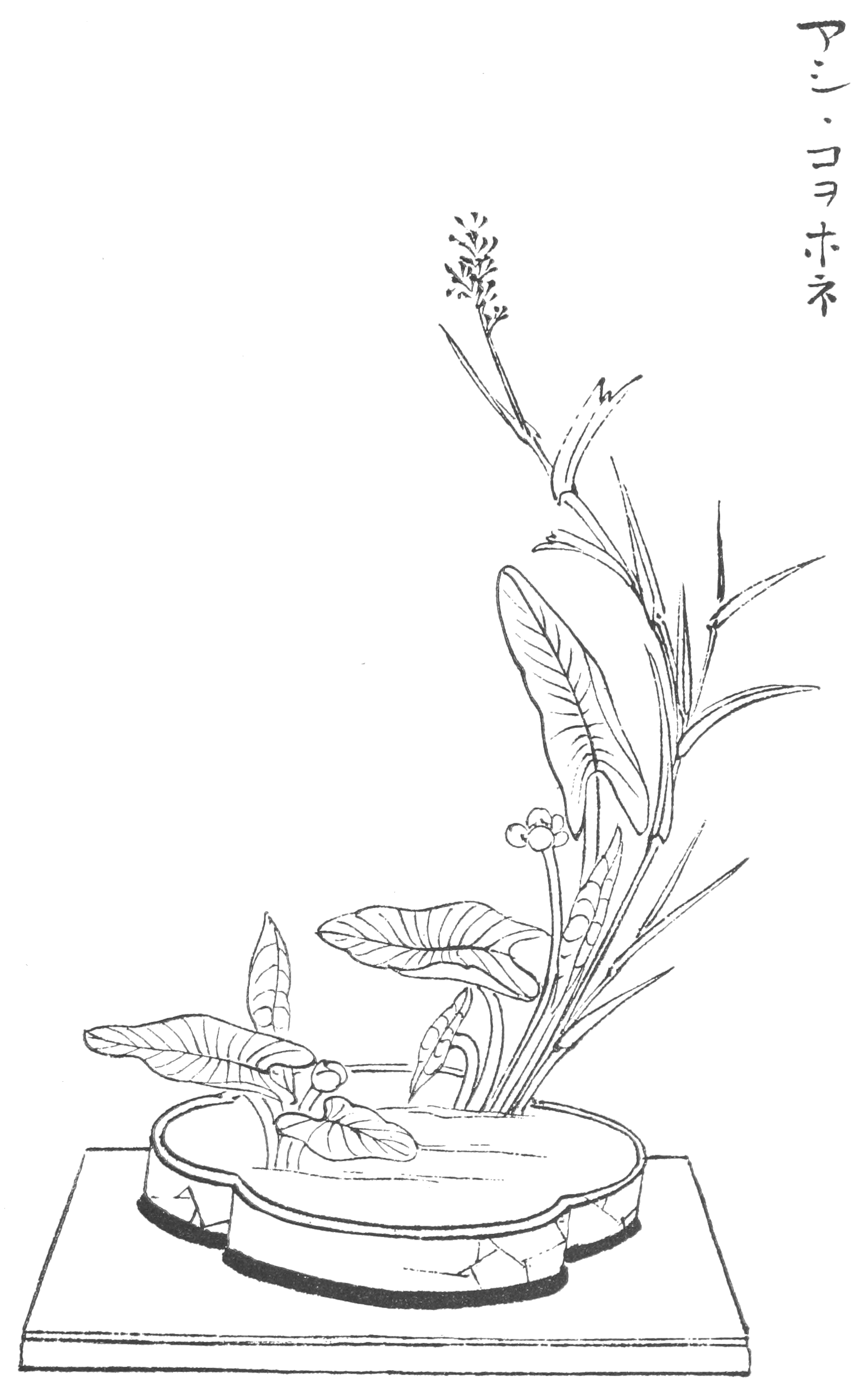 Japanese Flower Line Drawing : File japanese flower arrangement p wikimedia commons