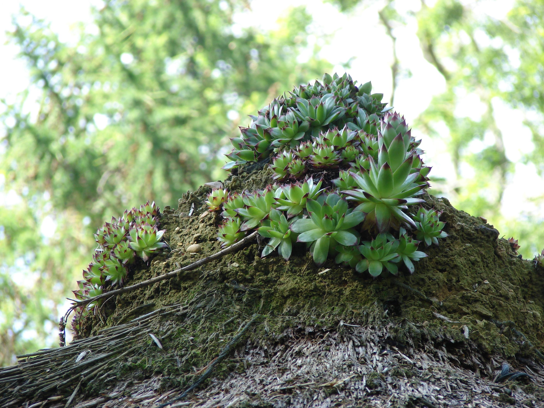 File:Jardin des plantes, Caen, Lower Normandy, France - panoramio - M.Strīķis (1).jpg ...