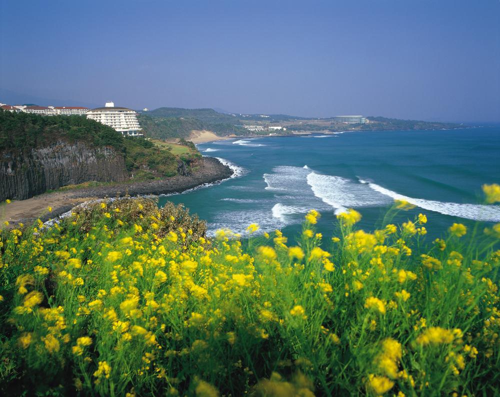 Image Result For Jeju