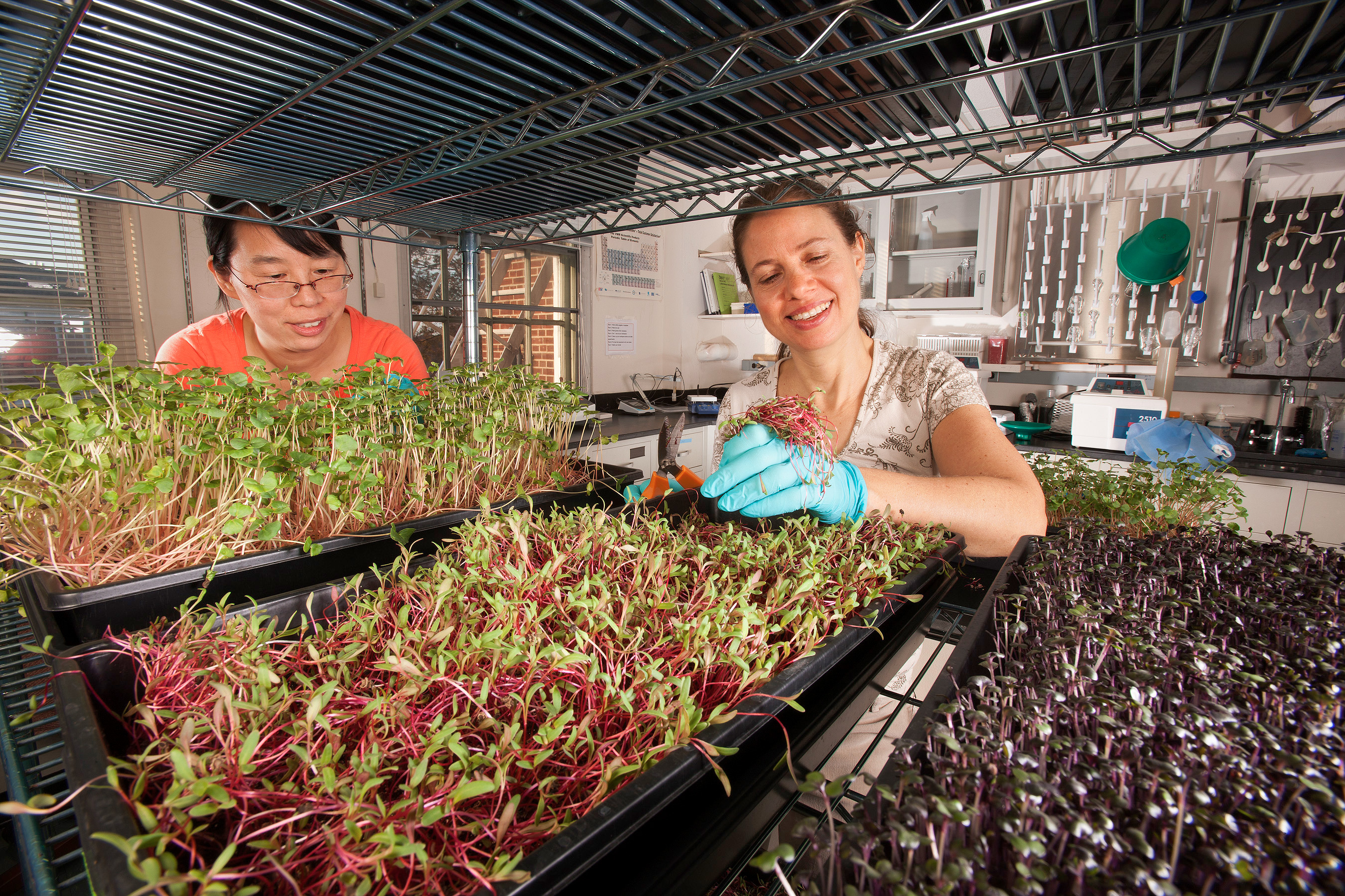 Microgreens. This is what