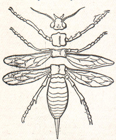 Filensrw Diagram Of The Parts Of An Insect