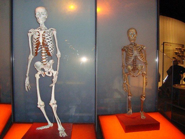 Evolution des Menschen: 10 Homo neanderthalensis - Der Neandertaler