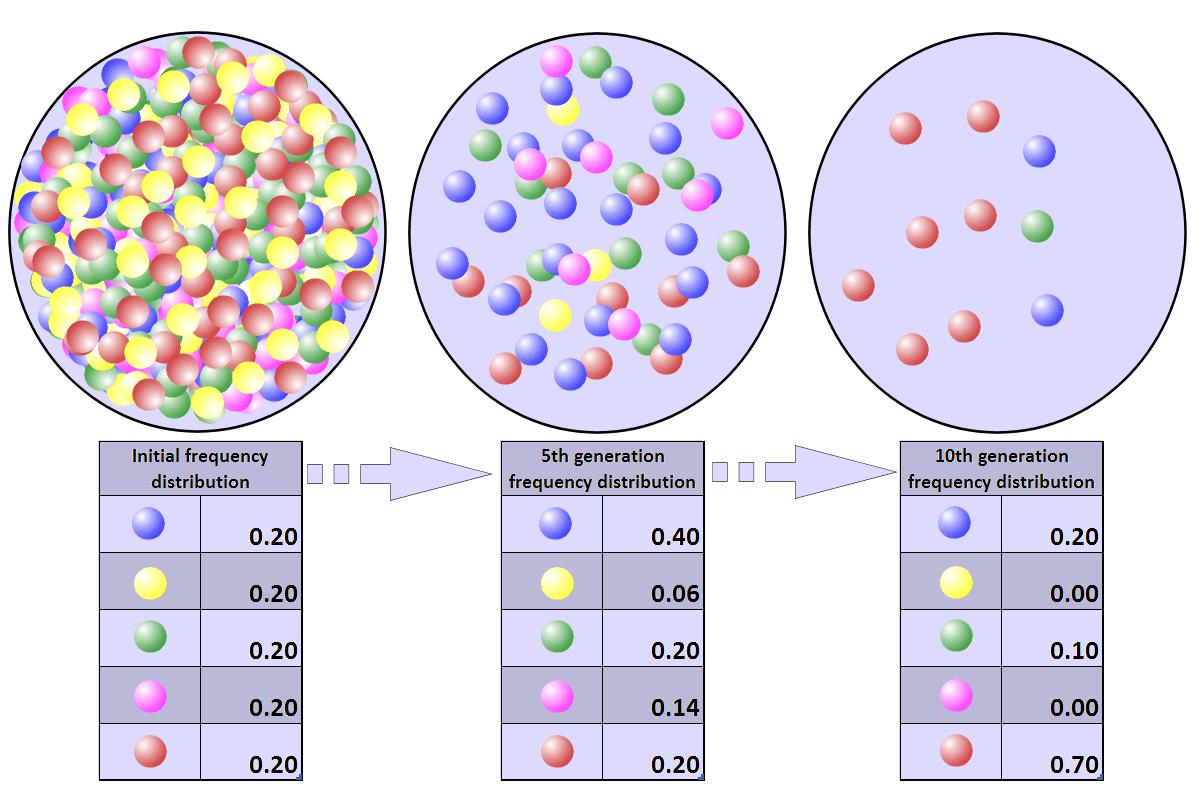 wiki effective population size