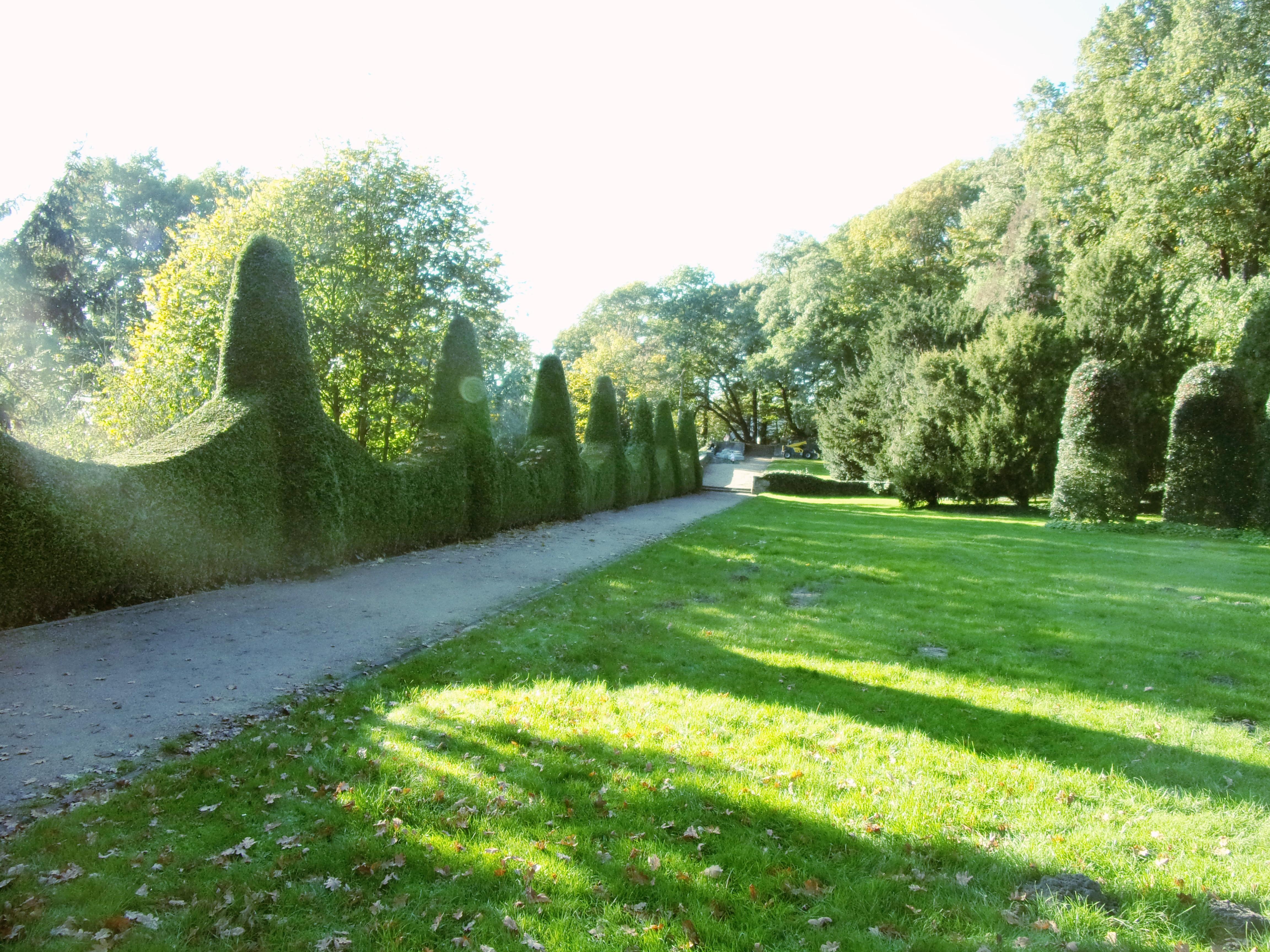 File Romischer Garten Thuja Hecke 2 Jpg Wikimedia Commons